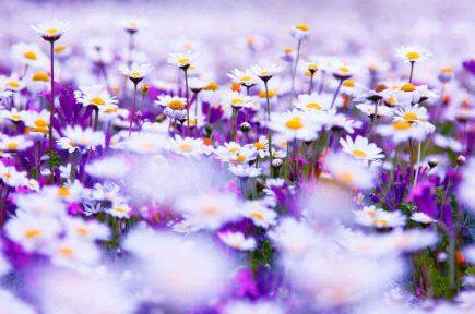 bloemen02bg